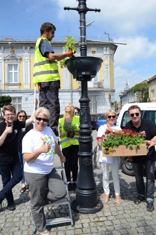 MOK Brzesko - Rewitalizacja zieleni na brzeskim rynku
